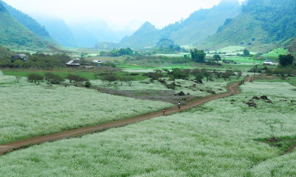 Scenery of Moc Chau plateau