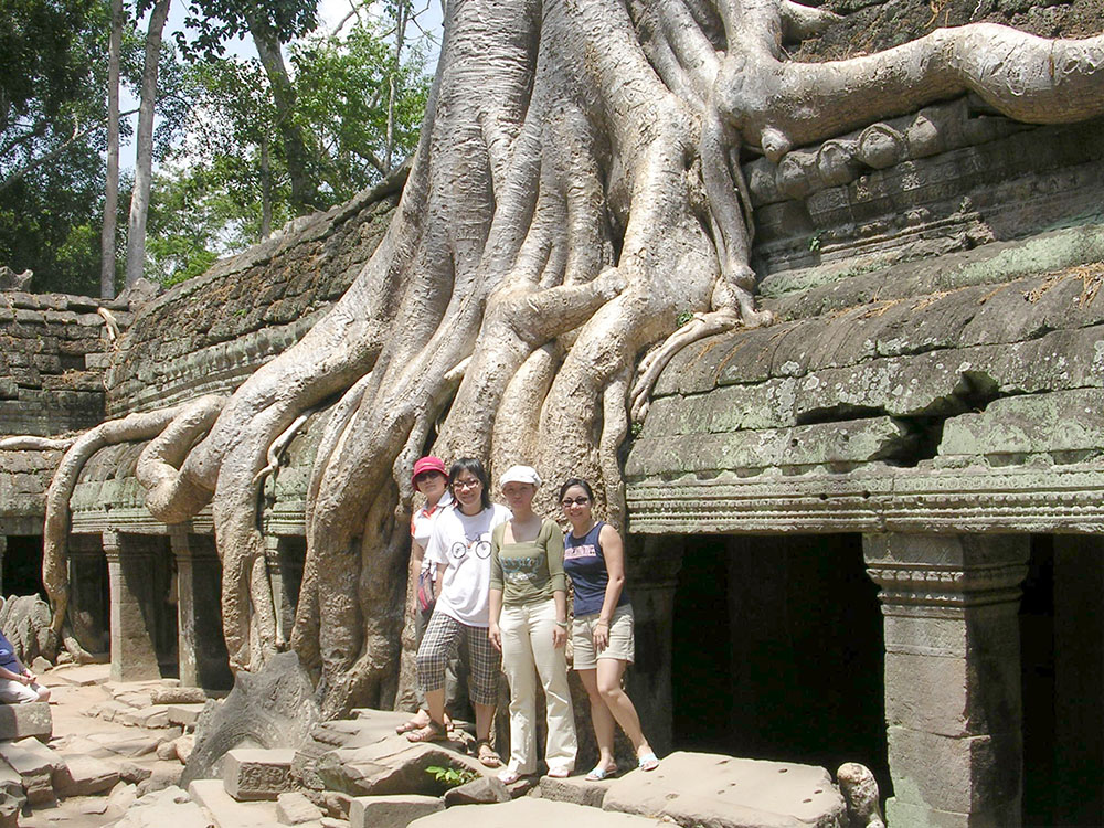 Giant fig tree entwined among ruins in Ta Prohm temple
