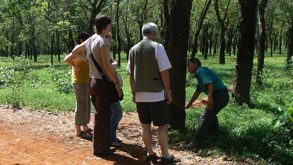 A visit to rubber plantation on the way to Cat Tien national park.
