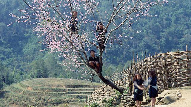 Hmong kids at CatCat village - Sapa Vietnam
