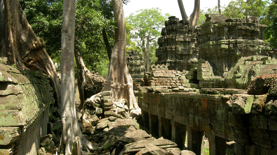 Taprohm temple - Siemreap Cambodia