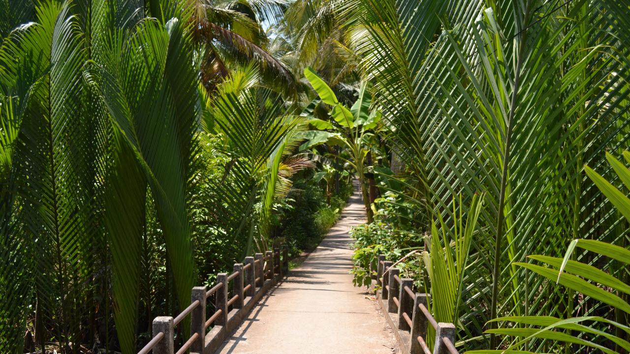 Typical road between villages - Cycling mekong delta BenTre