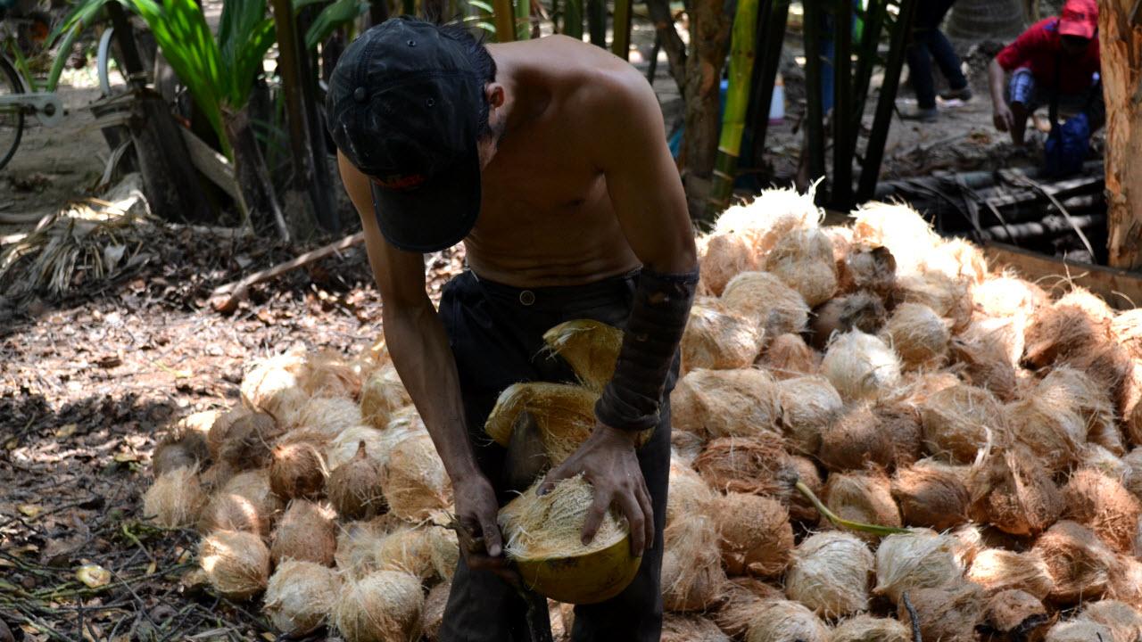 Coconut husk peeling workshop - Mekong delta cycling BenTre
