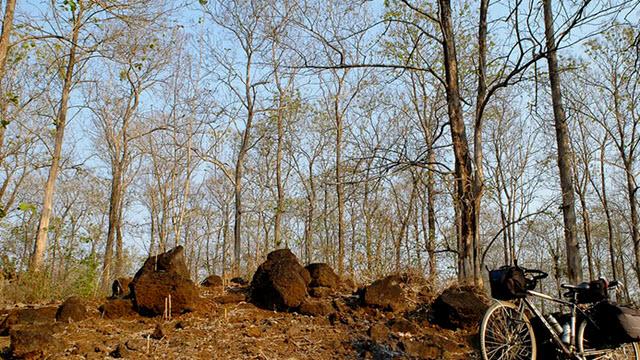 Teak wood forest near Cat Tien national park
