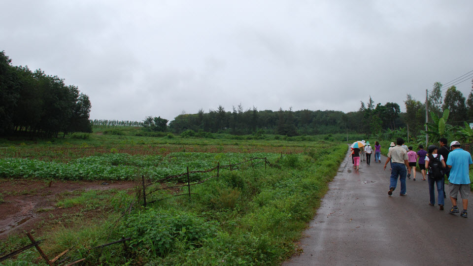 Former runway of NuiDat airbase now become rubber plantation