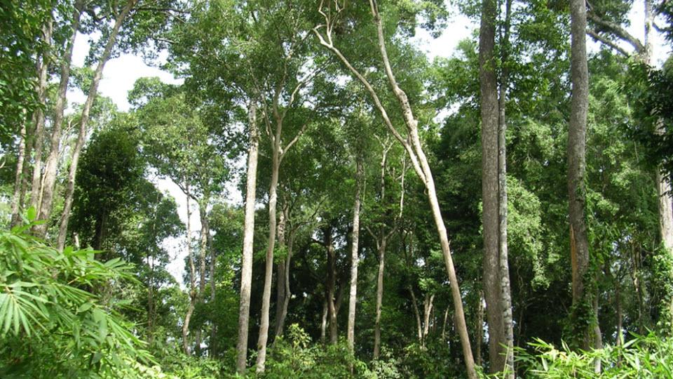 Cat Tien National Park Tour 2 Days - Evergreen forest trek.