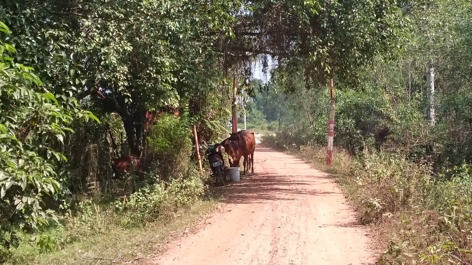 Bike to CuChi tunnels - single track from ThuDauMot to CuChi
